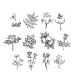 line art plants vector image vector image