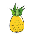pineapple fruit nature vector image vector image
