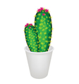 A Cactus Plant and Flower in Flowerpot vector image vector image