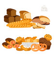 fresh bread isolated on white vector image vector image