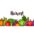 harvest festival banner autumn with vector image