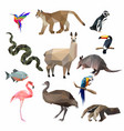 south america animals low poly i vector image