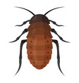 african cockroach icon wildlife bug and insect vector image vector image