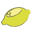 lemon citrus fresh fruit nature drawing vector image