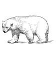 sketch walking polar bear