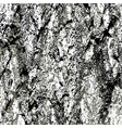 texture of a birch tree vector image