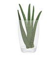 aloe vera plant in a glasss isolated vector image vector image