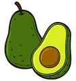 cartoon ripe avocado sliced in half vector image vector image