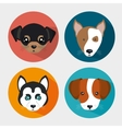 cute set puppy pet icons design vector image vector image