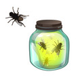 glass transparent jar with flies inside isolated vector image