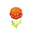 marigold flower floral icon realistic cartoon vector image vector image