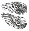 angel wings bird wings collection cartoon hand vector image vector image