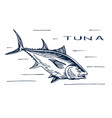 atlantic bluefin tuna for sushi vector image vector image