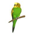 budgerigar common or shell parakeet informally vector image