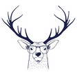 deer in glasses vector image vector image