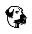 head an anatolian shepherd dog or kangal side vector image vector image