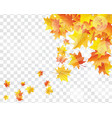 maple leaves on transparency grid vector image