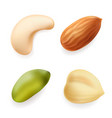 nuts set hazelnut pistachio almond cashew vector image vector image