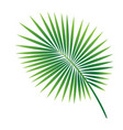 tropical palm leaf isolated on white background vector image vector image