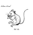autumn animal hand drawn of field mice isolated vector image vector image