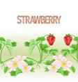Border seamless background of strawberries