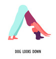dog looks down pose yoga position or asana sport vector image