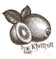 kiwi logo design template fresh fruit vector image vector image