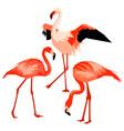 set flamingo tropical bright abstract birds vector image vector image