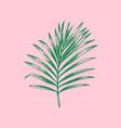 palm leaf on pink background vector image