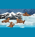 scene with many seals on ice vector image vector image