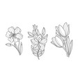 set of 3 sketchy ornamental flowers vector image vector image