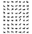 silhouettes of dogs vector image vector image