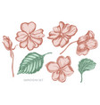 collection of hand drawn pastel impatiens vector image vector image