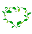 Noni Fruits and Leaves Forming in Heart Shape vector image vector image