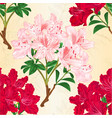 seamless texture red and pink rhododendrons vector image vector image