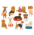 small dog a little doggy pet character cute vector image