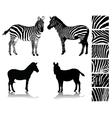 zebra 1 vector image vector image