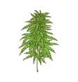 cannabis leaves green weed hemp icon vector image