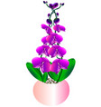 set of beautiful blooming orchids in a pot vector image