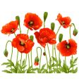 Spring flowers poppy vector | Price: 3 Credits (USD $3)