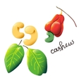 colorful cartoon cashew vector image
