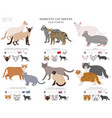 domestic cat breeds and hybrids collection vector image vector image