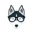 husky in glasses cute dog vector image vector image
