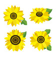 set of colored sunflowers vector image vector image