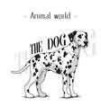 animal world the dog dalmatian background i vector image vector image