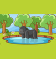 scene with gorilla in forest vector image vector image