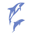 a pair of dolphins vector image vector image