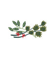green twigs with red ribbons natural design vector image