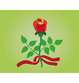 red rose with ribbon vector image vector image