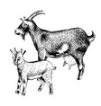 hand drawn goat with goatling farm animals vector image vector image